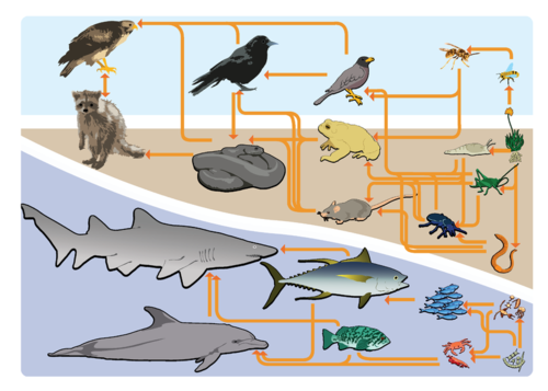Food Chains And Food Webs   Read
