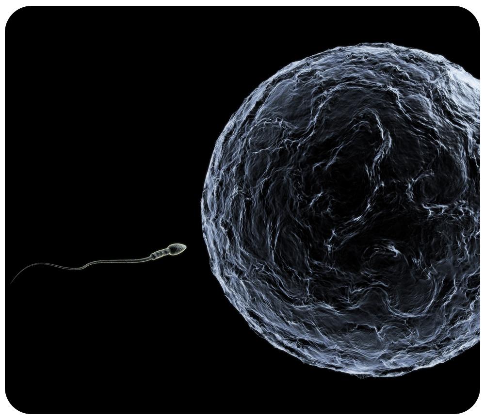 in sperm Cover