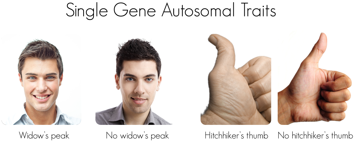 Is It Possible To Have An Autosomal Sex Linked Gene 45